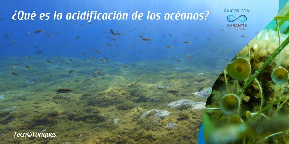 que-es-la-acidificacion-de-los-oceanos